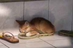 cucciolo-di-gatto-che-dorme